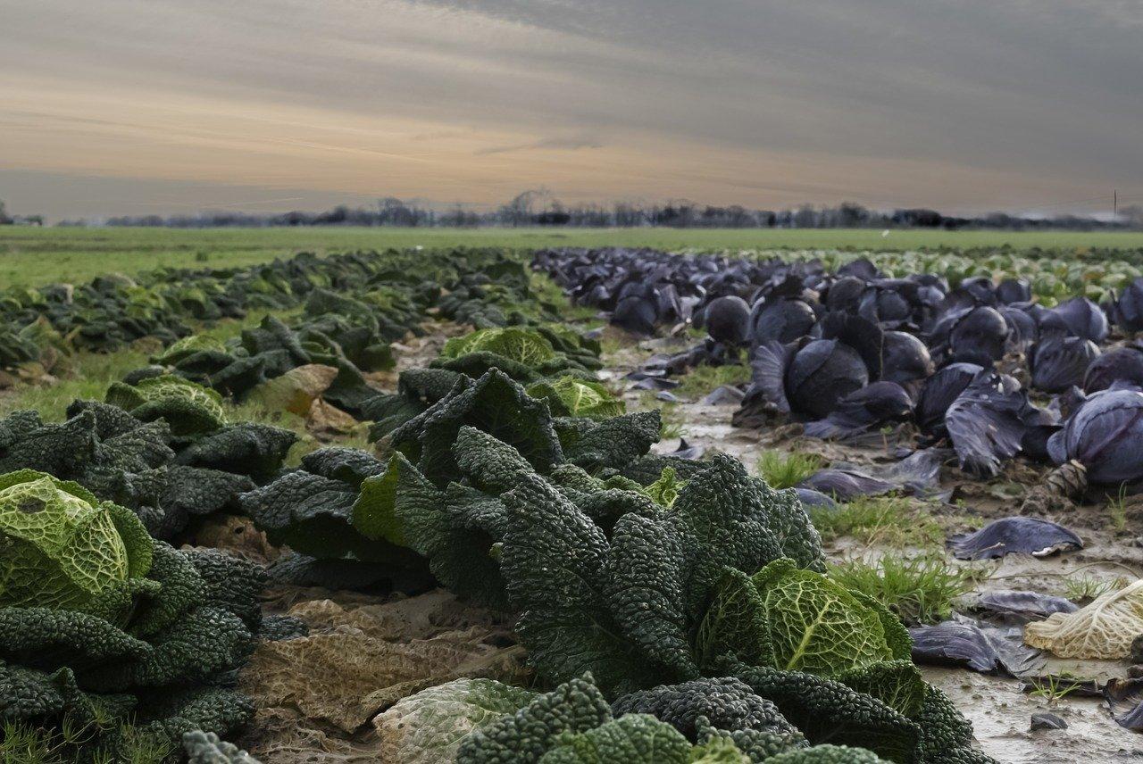 SLC (SLCE3) fecha arrendamento de 39 mil ha em áreas da BA e MG com Agrícola Xingu