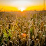 SLC (SLCE3) fecha arrendamento de 39 mil hectares em áreas da BA e MG com Agrícola Xingu